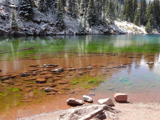 Moose food, even something as simple as algae was beautiful.