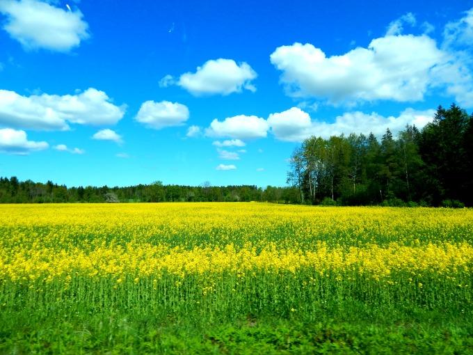 I Love Latvia, Lithuania, and Estonia! Where Are TheyAgain?