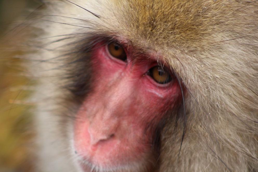 A Monkey 2.JPG