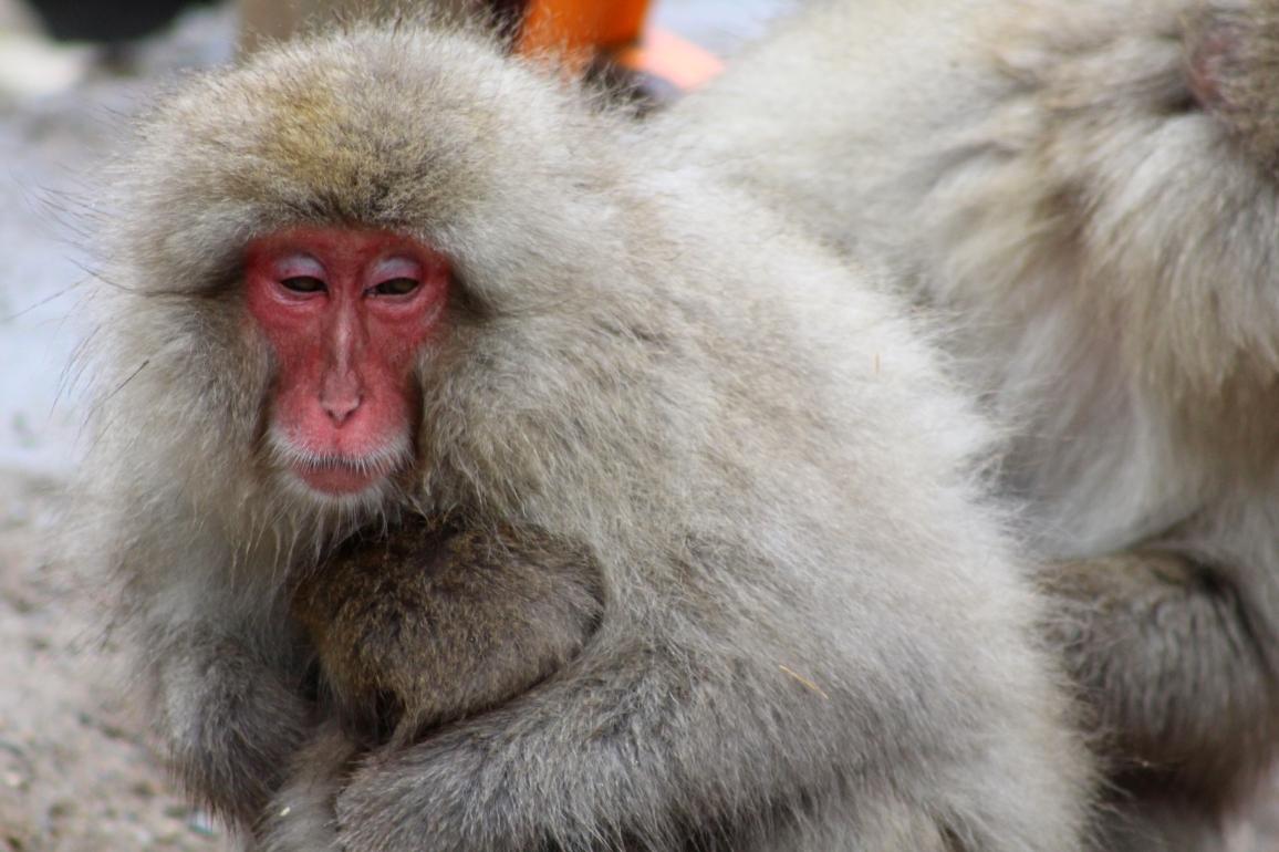A Monkey 4.JPG