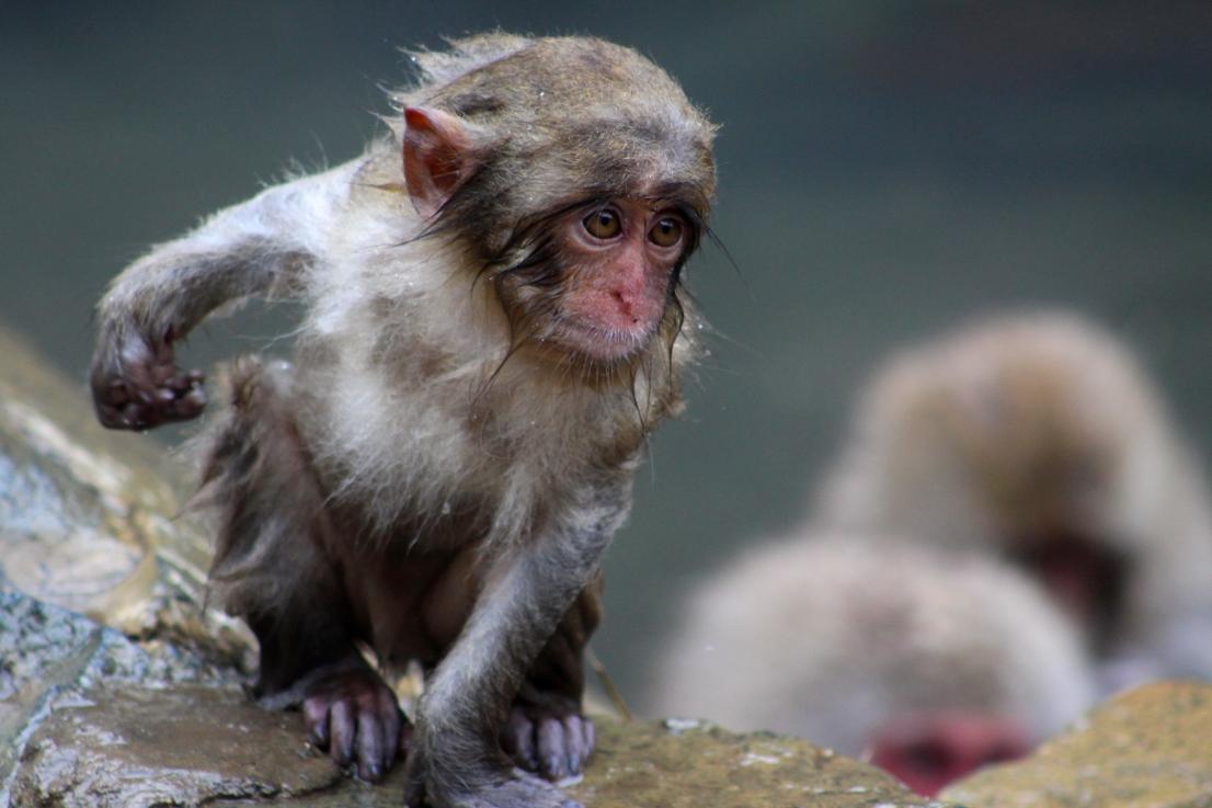 A Monkey 5.JPG