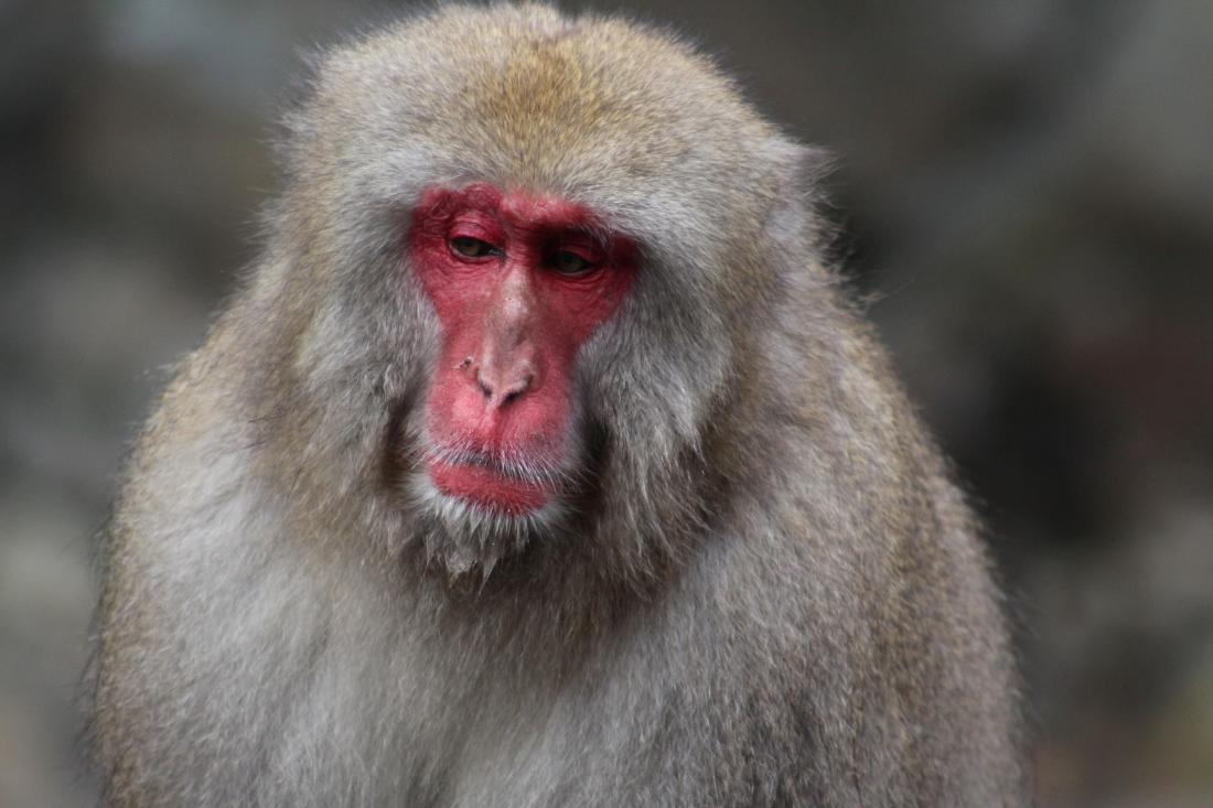 A Monkey 6.JPG