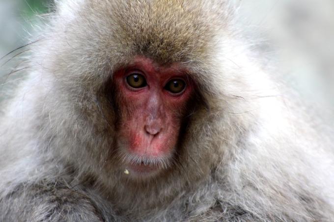 A Monkey 8.JPG