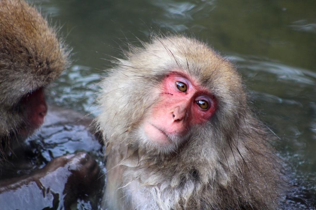 A Monkey7.JPG